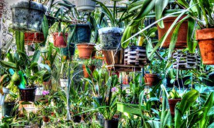 El cuidado de las plantas en macetas