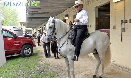 La afición a los caballos de paso fino en Miami